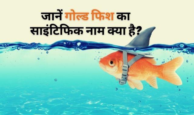 Goldfish ka Scientific Naam Kya hai? जानें गोल्ड फिश का साइंटिफिक नाम क्या है?